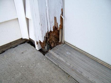Спасаем деревянный дом от разрушения насекомыми. 998.jpeg