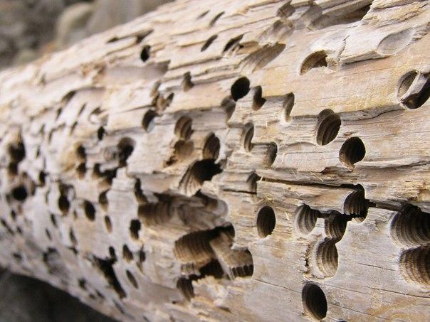Спасаем деревянный дом от разрушения насекомыми. 999.jpeg